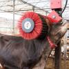 Lely: cresce il benessere delle bovine con la nuova spazzola rotante Luna