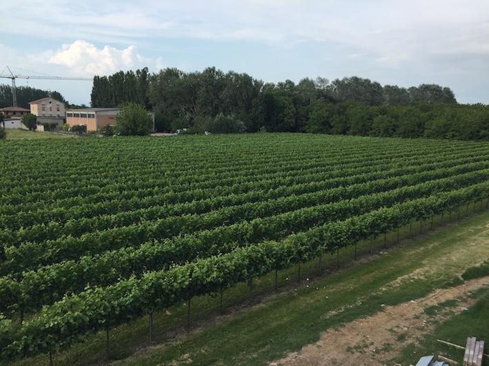 Enovitis in Campo 2018: appuntamento il 21 e 22 giugno a Fabbrico (Reggio Emilia)