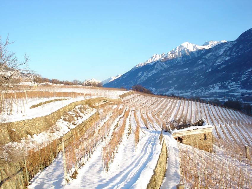 Enovitis Extrême: appuntamento con la viticoltura di montagna il 19 luglio a Quart (Aosta)
