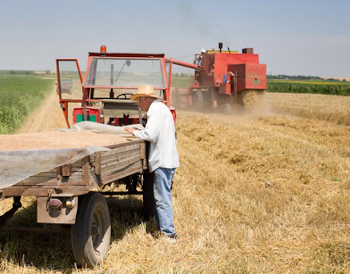 Agricoltore che risale UK gratis