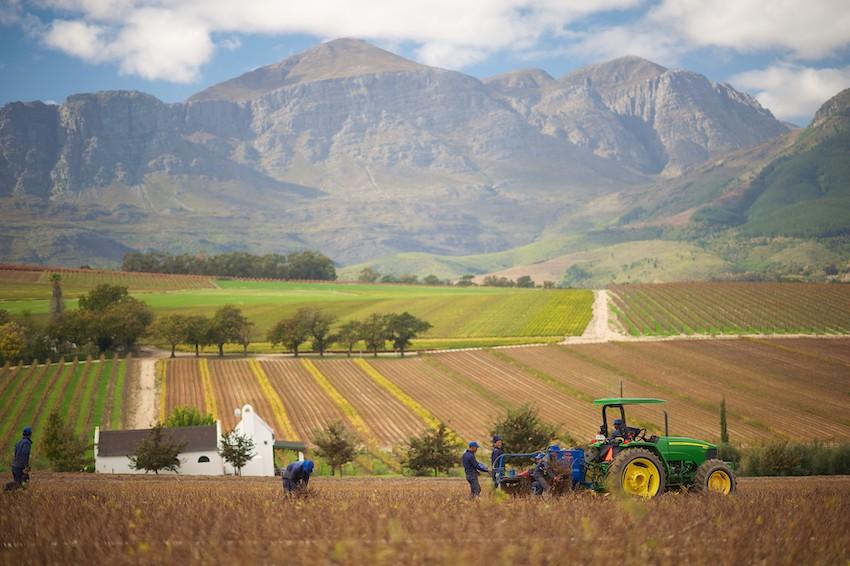 """Fieragricola: in Sudafrica dal 2 al 4 ottobre con le tecnologie """"made in Italy"""" per il vigneto e frutteto"""