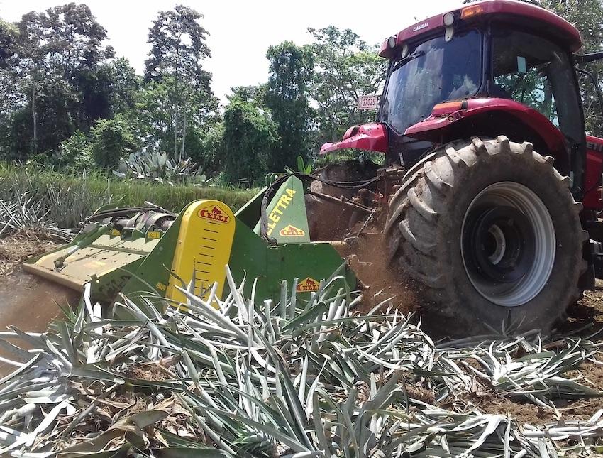 Celli: all'Agritechnica soluzioni innovative per le coltivazioni di ananas e luppolo